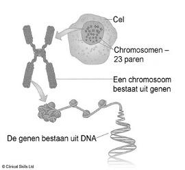 marfan syndroom test, Funs Lemmens,  Genen, Klinisch onderzoek,